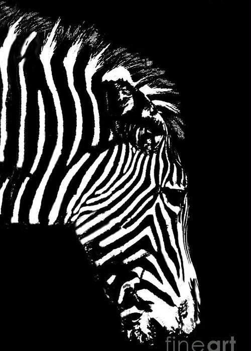 Zebra Greeting Card featuring the photograph Ze Bra by Sheila Laurens