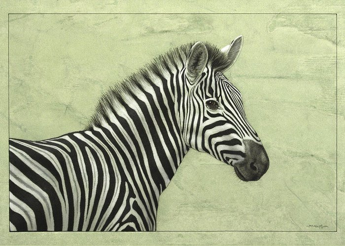 Zebra Drawings Greeting Cards