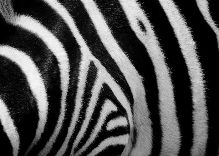 Zebra Skin Greeting Card For Sale By Paulette Thomas