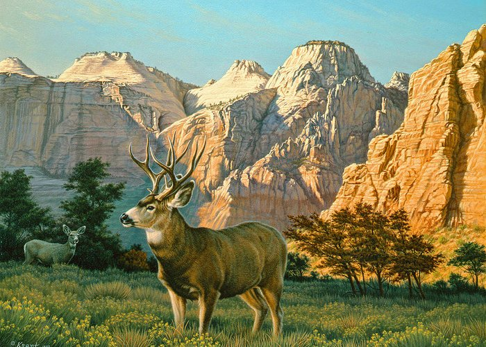 Canyon Country Greeting Cards