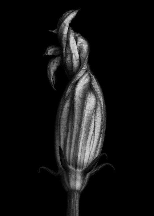 Zucchini Greeting Card featuring the photograph Zucchini Flower In Black And White by Robert Woodward