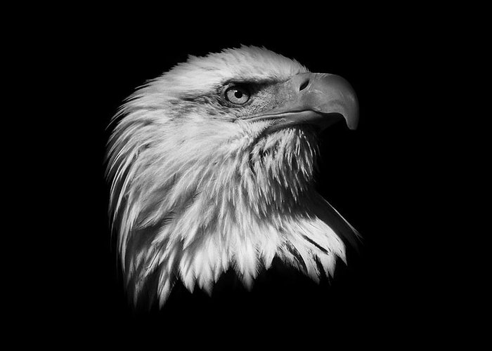 Black And White Greeting Card featuring the photograph Black And White American Eagle by Steve McKinzie