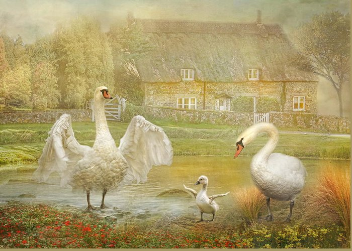 Swan Greeting Card featuring the photograph Early Preparations by Trudi Simmonds