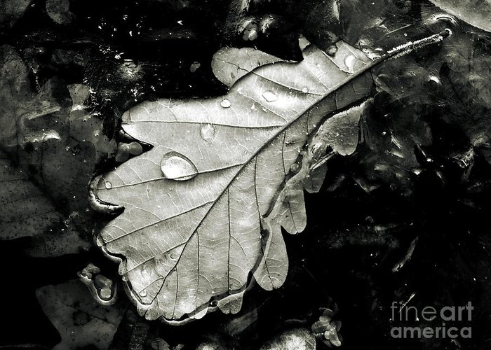Nature Greeting Card featuring the photograph Leaf by Odon Czintos