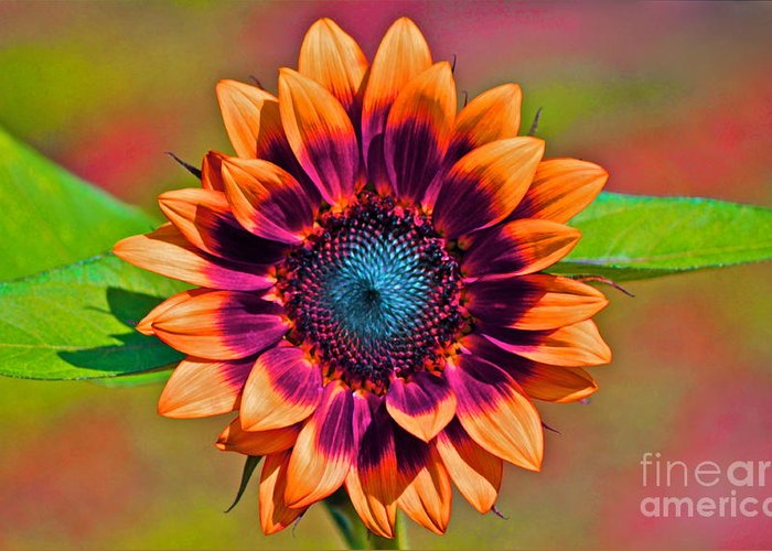 Sunflower Greeting Card featuring the photograph Orange Flowers In Their Buttonholes by Gwyn Newcombe