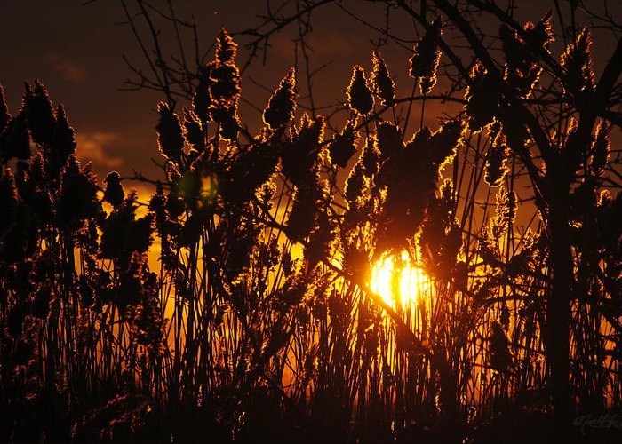 Greeting Card featuring the photograph 05 Sunset by Michael Frank Jr
