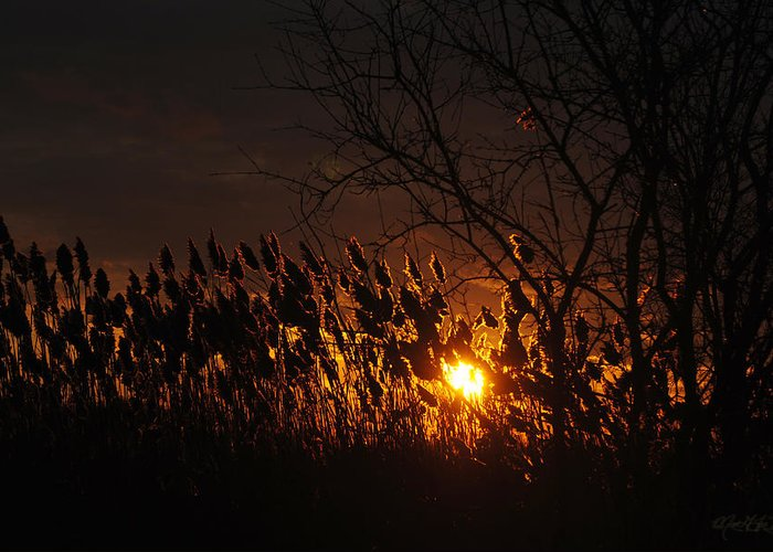 Greeting Card featuring the photograph 06 Sunset by Michael Frank Jr