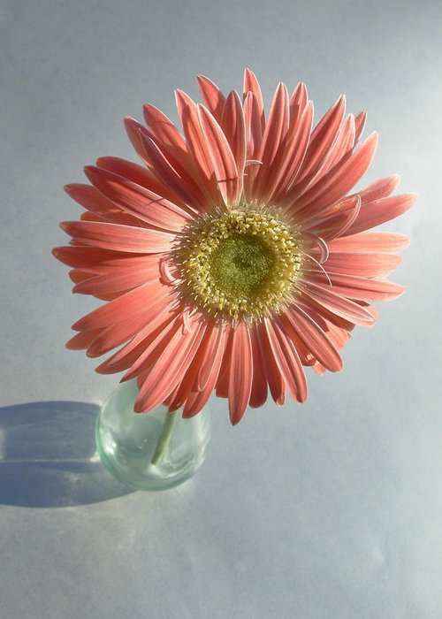 Gerbera Photographs Greeting Card featuring the photograph 0738 by Kimberlie Gerner
