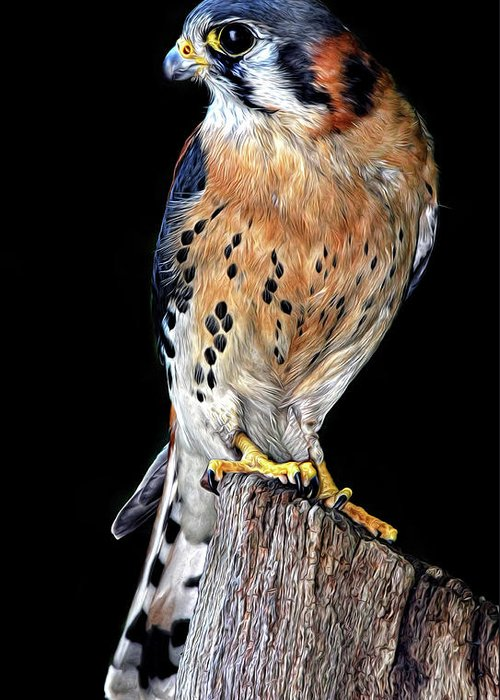 American Kestrel Greeting Card featuring the photograph American Kestrel by Dave Mills