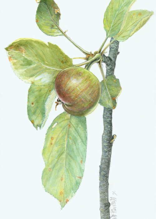 Apples Greeting Card featuring the painting Apple Branch by Scott Bennett