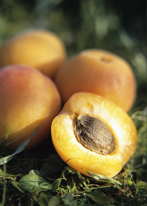 Prunus Armeniaca Greeting Card featuring the photograph Apricots by Veronique Leplat