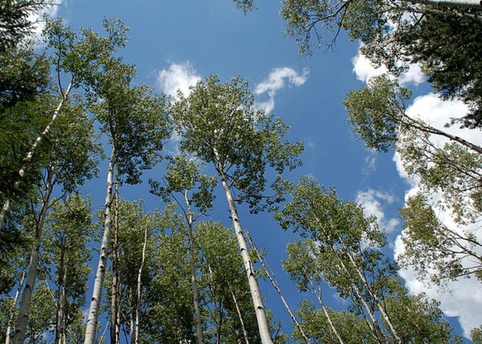 Sky Greeting Card featuring the photograph Aspen Sky by Dietrich Sauer