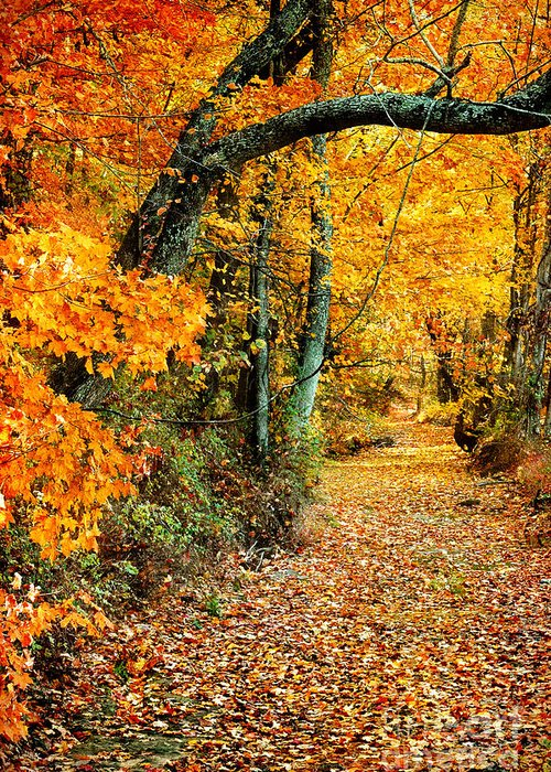 Autumn Greeting Card featuring the photograph Autumn Pathway by Cheryl Davis