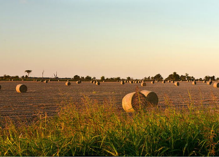 Peanut Greeting Card featuring the photograph Bales In Peanut Field 2 by Douglas Barnett