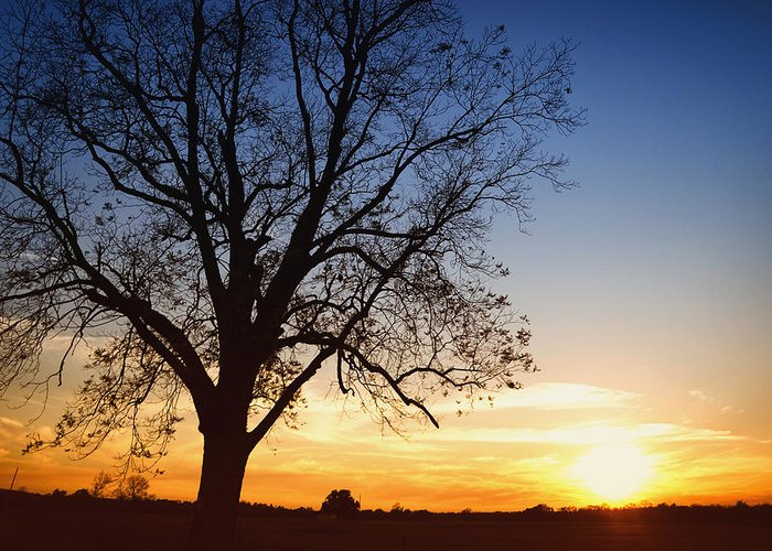Absence Greeting Card featuring the photograph Bare Tree At Sunset by Skip Nall
