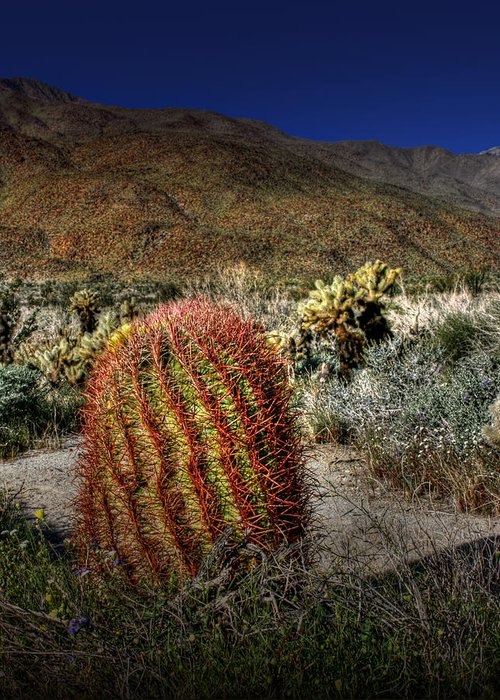 Barrel Cactus Greeting Card featuring the photograph Barrel Cactus by Chris Brannen