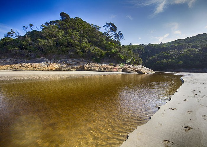 Tidal River Greeting Card featuring the photograph Beach Erosion by Douglas Barnard