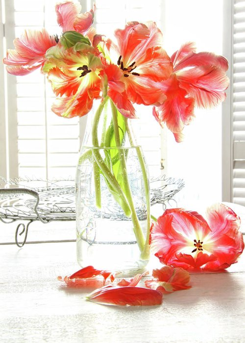 Background Greeting Card featuring the photograph Beautiful Tulips In Old Milk Bottle by Sandra Cunningham