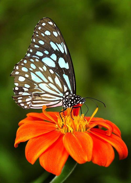 Blue butterfly Photograph by Anek Suwannaphoom