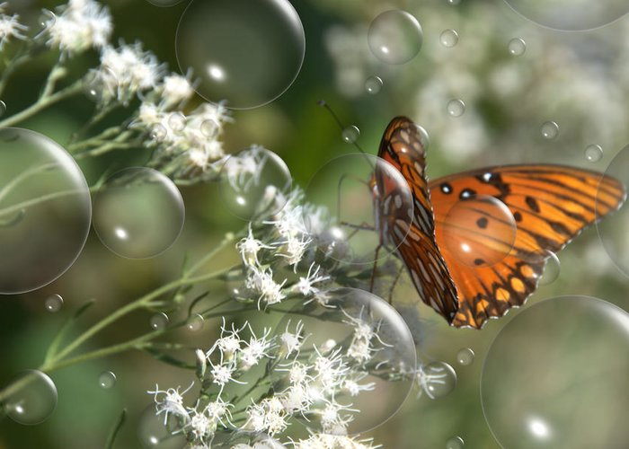 Butterfly Greeting Card featuring the photograph Bubble Fly by Steven Richardson