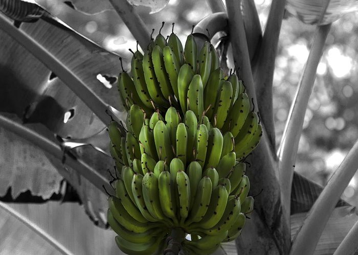 Banana Greeting Card featuring the photograph Bunch Of Bananas by Gord Patterson