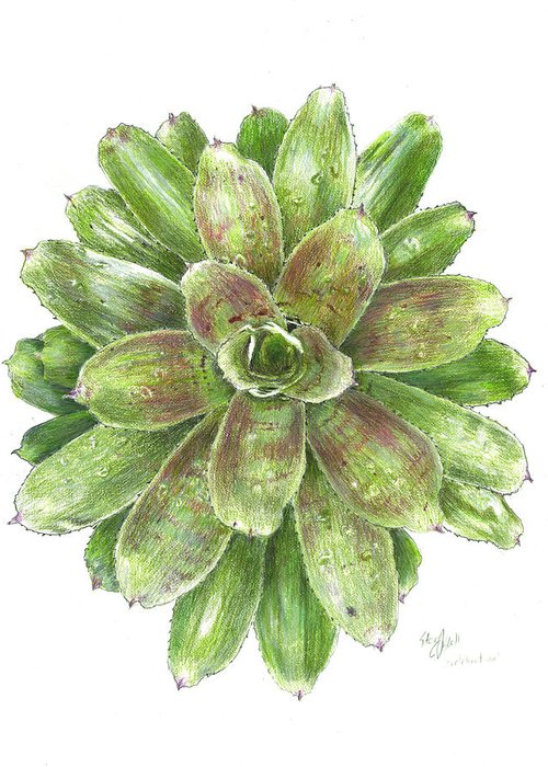 Neoregelia Greeting Card featuring the drawing Celebration by Steve Asbell