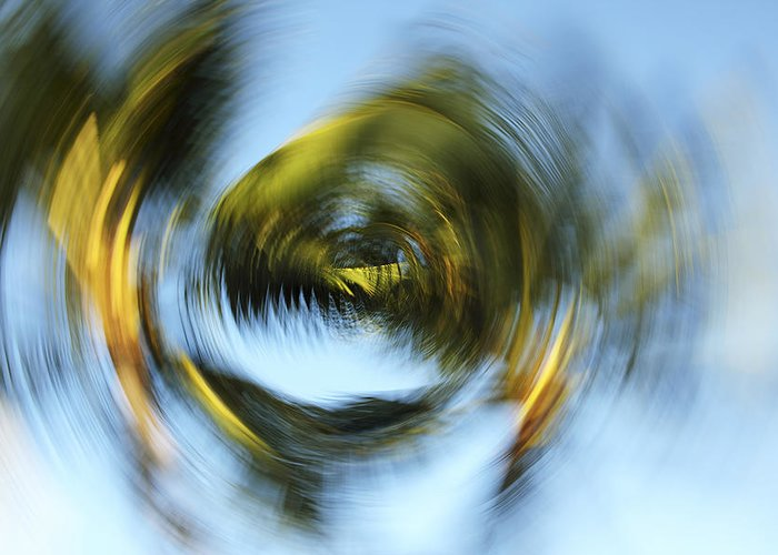 Abstract Greeting Card featuring the photograph Circular Palm Blur by Vince Cavataio - Printscapes