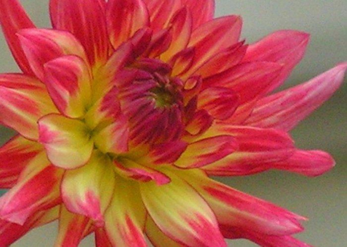 Fall Flowers Greeting Card featuring the photograph Dahlia by Selma Glunn