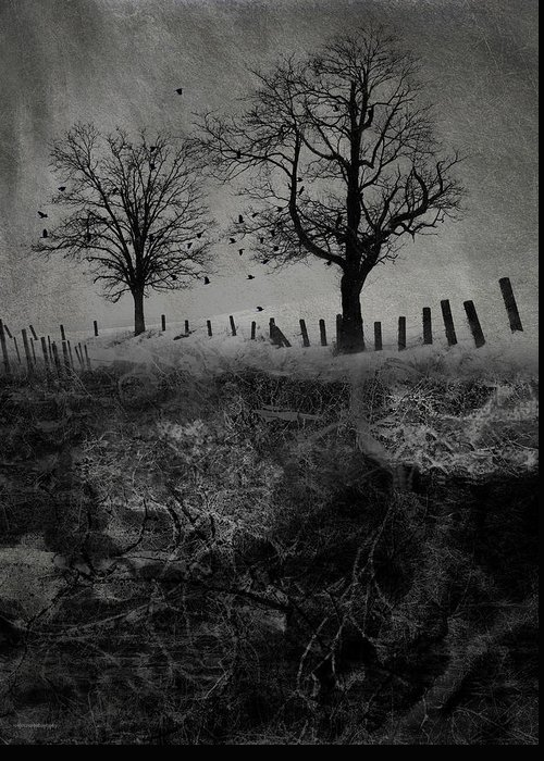 Trees Greeting Card featuring the digital art Dark Roost by Ron Jones