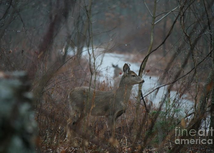 Deer Greeting Card featuring the photograph Deer Portrait by Neal Eslinger