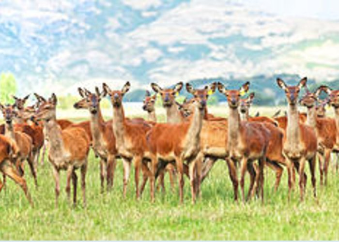 Deer Greeting Card featuring the photograph Deers by MotHaiBaPhoto Prints