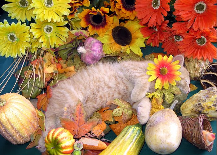 Di Milo Greeting Card featuring the photograph Di Milo - Flower Child - Kitty Cat Kitten Sleeping In Fall Autumn Harvest by Chantal PhotoPix