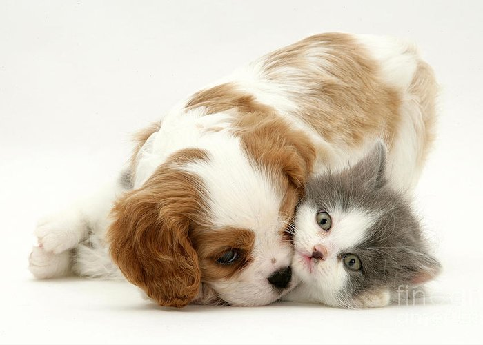 Animal Greeting Card featuring the photograph Dog And Cat by Jane Burton