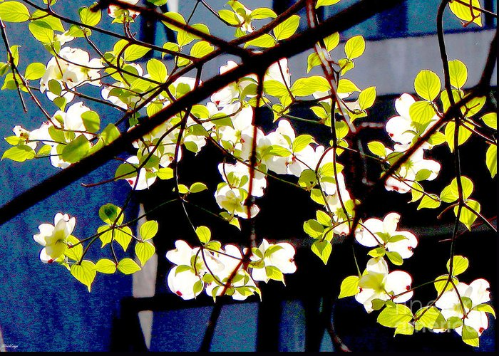 Blossoms Greeting Card featuring the photograph Dogwood Blossoms by Ulrich Lange
