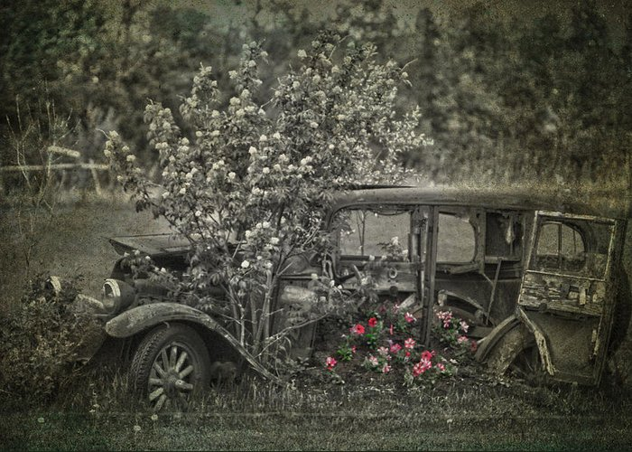 Jerry Cordeiro Framed Prints Photographs Greeting Card featuring the photograph Driven To Find Love by The Artist Project
