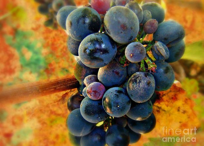 Wine Greeting Card featuring the photograph Fall Harvest by Kevin Moore