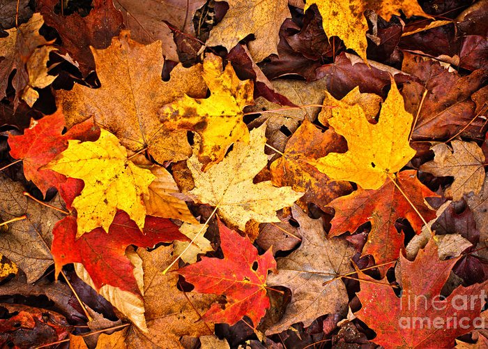 Leaves Greeting Card featuring the photograph Fall Leaves Background by Elena Elisseeva