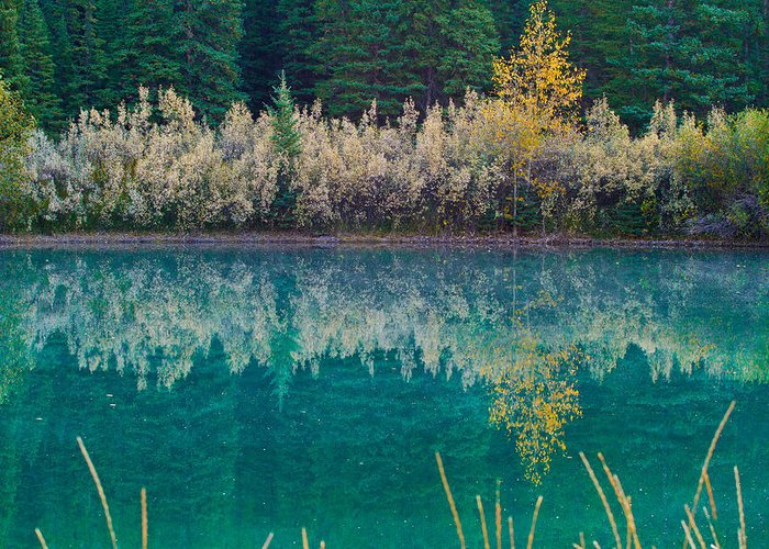 Nature Greeting Card featuring the photograph Fall Reflections by Manju Shekhar