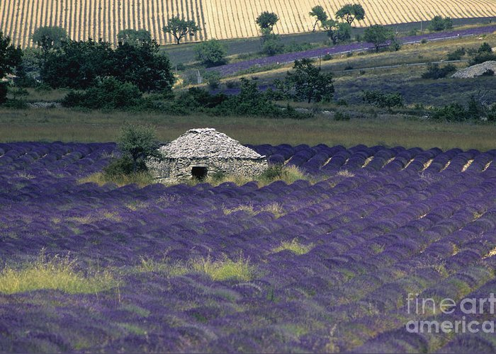 Touristic Greeting Card featuring the photograph Field Of Lavender. Sault by Bernard Jaubert