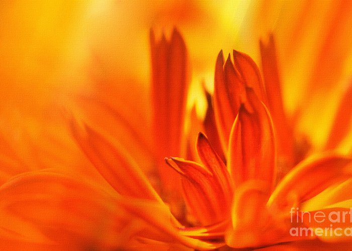 Flowers Greeting Card featuring the photograph Fire Storm by Elaine Manley