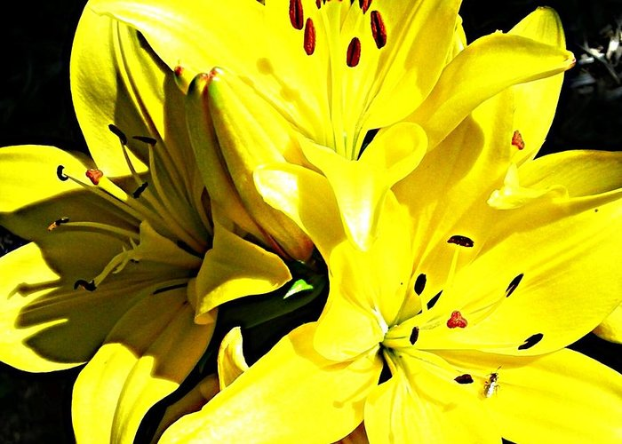 Greeting Card featuring the photograph Flow by Tim Burgin