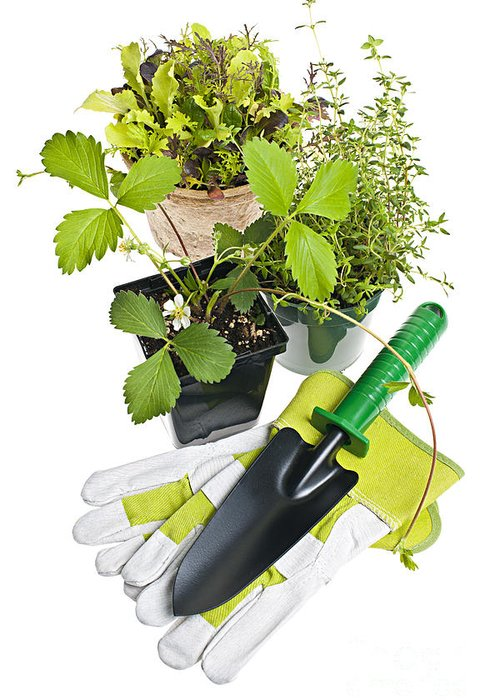 Gardening Greeting Card featuring the photograph Gardening Tools And Plants by Elena Elisseeva