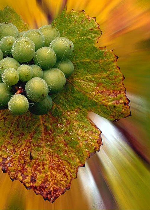 Vineyard Greeting Card featuring the photograph Grapes by Jean Noren