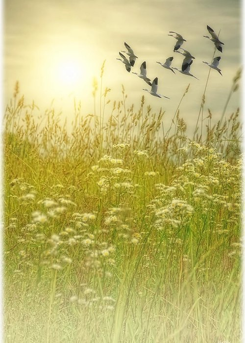 Nature Photography Greeting Card featuring the photograph In God's Country by Tom York Images
