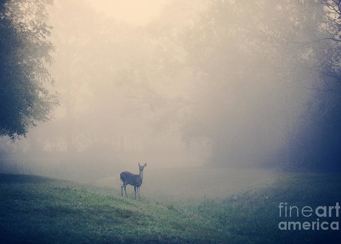Deer Greeting Card featuring the photograph In The Quiet by Katya Horner