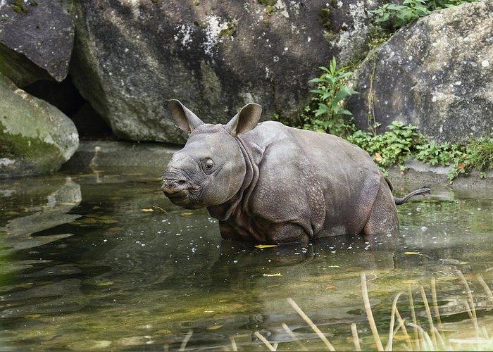Mp Greeting Card featuring the photograph Indian Rhinoceros Rhinoceros Unicornis by Konrad Wothe