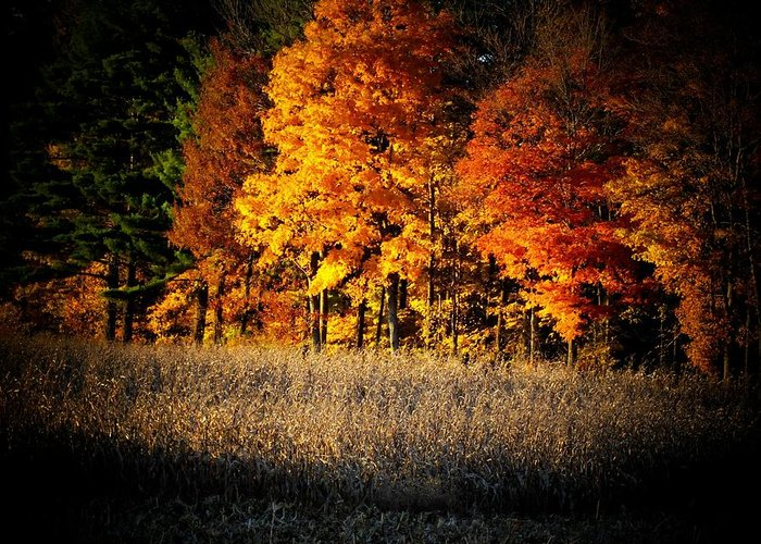 Trees Greeting Card featuring the photograph Indiana Autumn by Michael L Kimble