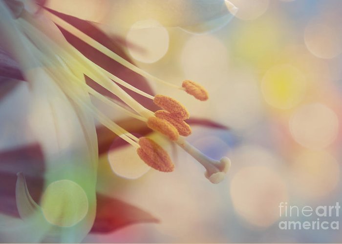 Bokeh Greeting Card featuring the photograph Joyfulness by Aimelle