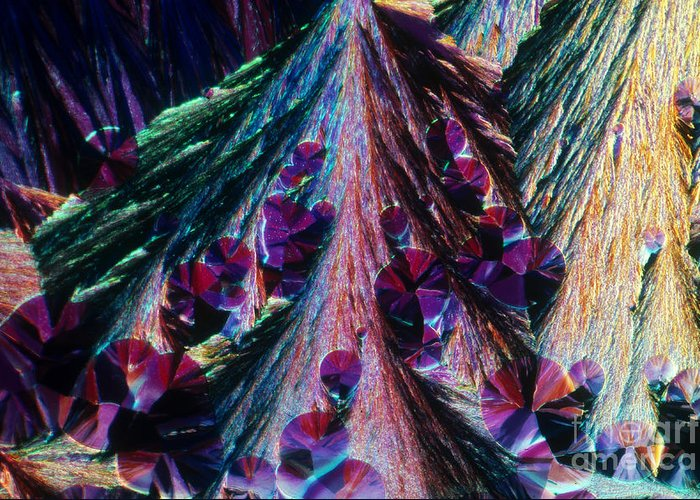 Polarized Light Micrograph Greeting Card featuring the photograph L. Histidine Crystals by M. I. Walker
