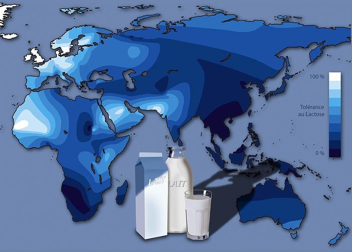 Lactose Intolerance Greeting Card featuring the photograph Lactose Tolerance, Eurasia And Africa by Art For Science